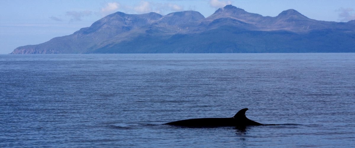 Scottish Wildlife Cruises